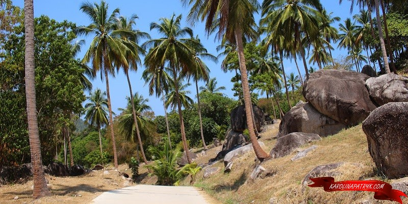 Palm trees on Koh Tao island