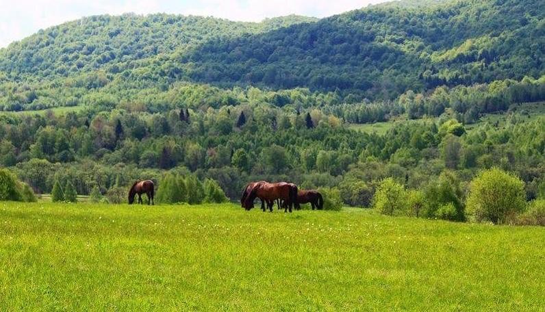 Subcarpathian Province