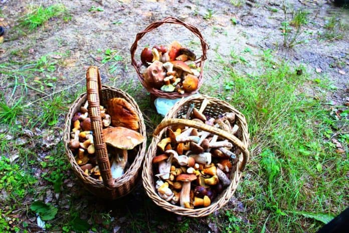 Mushroom hunting - the best summer activity in Poland!