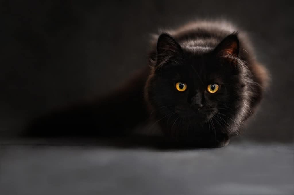 Fun facts about Poland: Poles are scared of black cats
