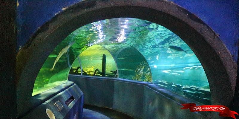 Aquarium in Chiang Mai Zoo