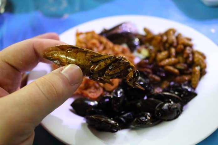 Eating fried insects in Thailand