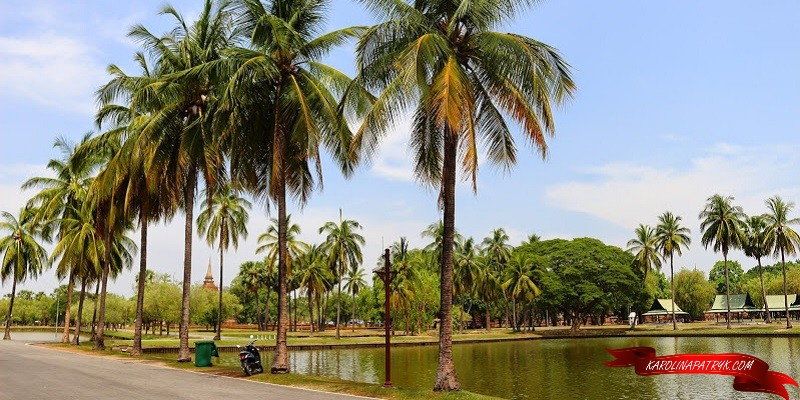 Palm trees and lake