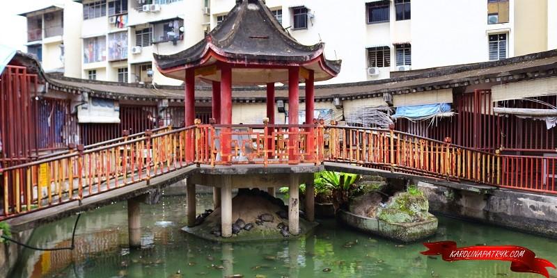 Turtles in Kek Lok Si temple in Penang