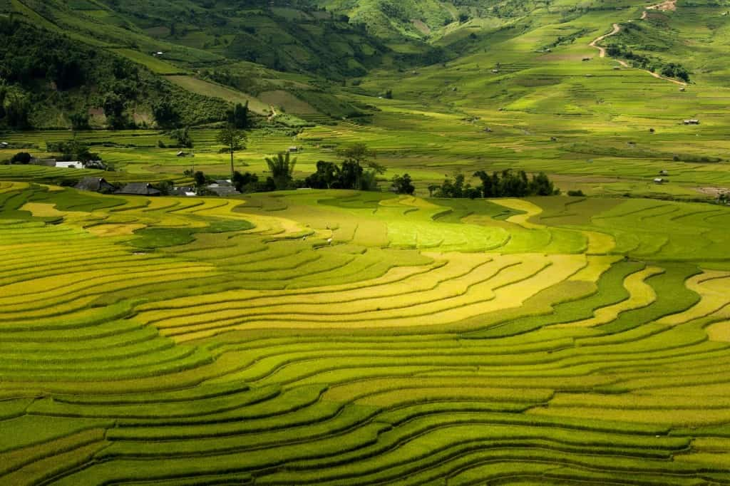 vietnam sapa rice fields terraces