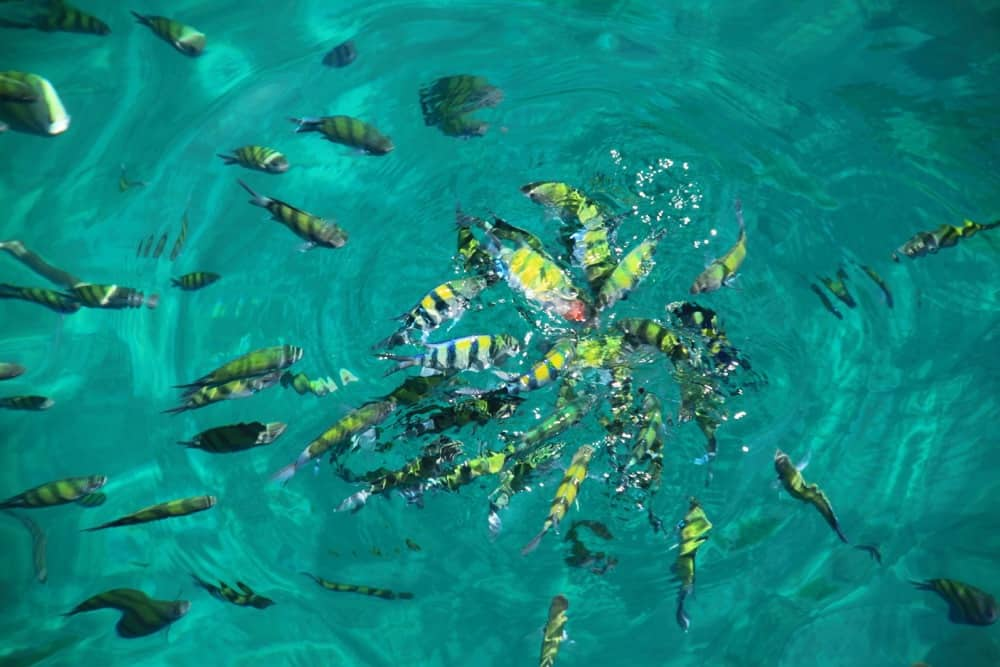 Fish in the Thai sea