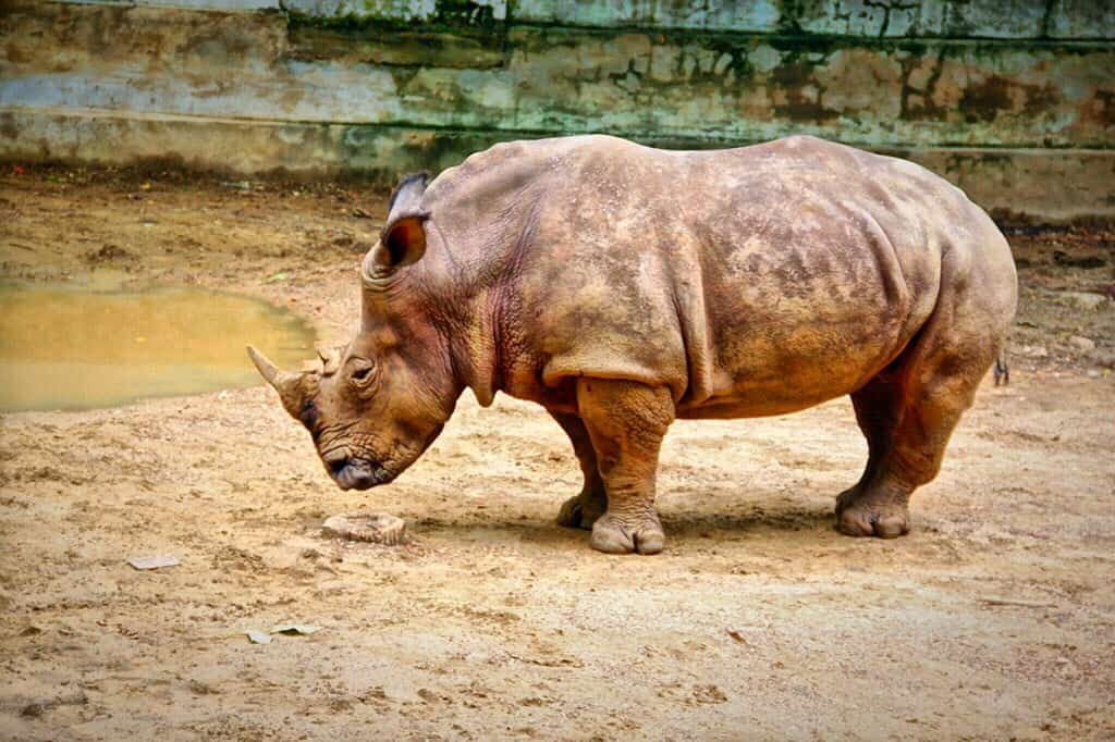 Yangon zoo