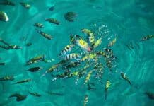 Sea life of Andaman Sea