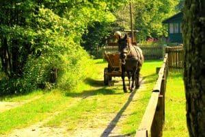 Horse in Poland