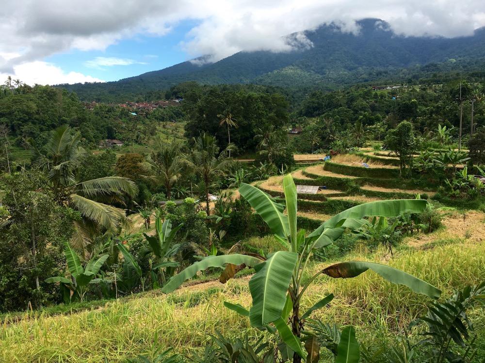 Shandos - Jatiluwih Rice Terraces