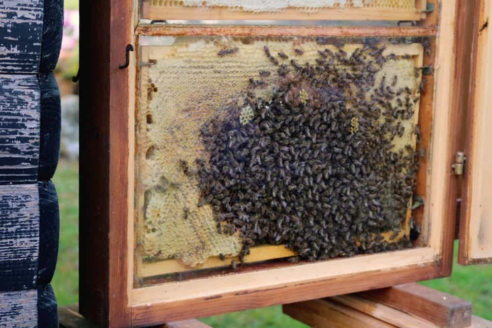 bees-producing-honey