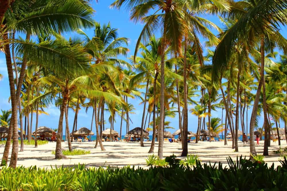 beach-palms
