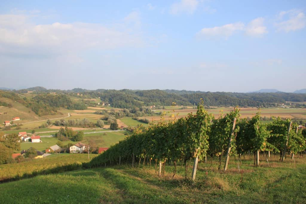 wine - Slovenia facts