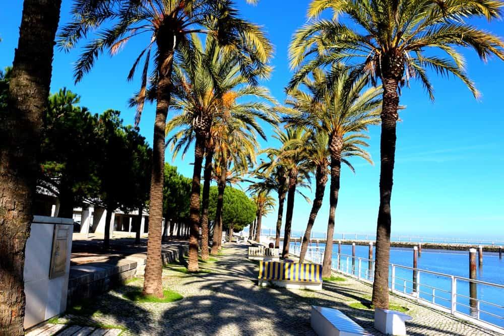 palm-trees-lisbon
