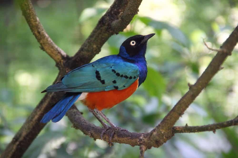 bird bhutan