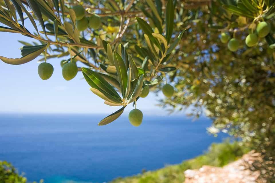 Interesting fact about Jordan: 12 Million Olive Trees