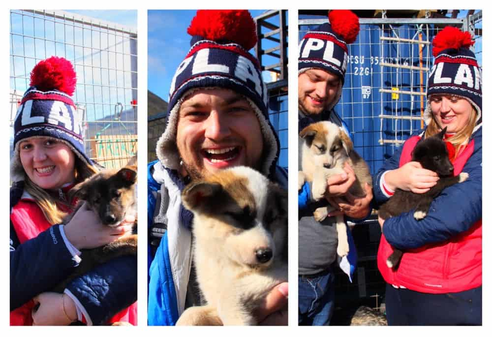 Be sure to play with puppies while visiting Svalbard.
