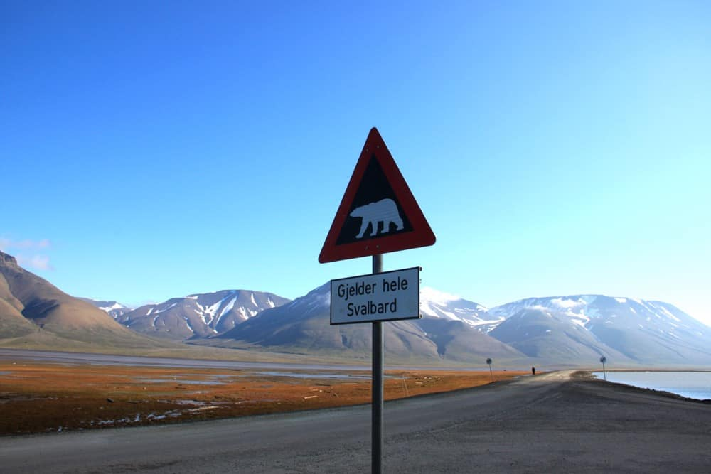 Polar bears can be quite dangerous, so don't leave the town without the guard.
