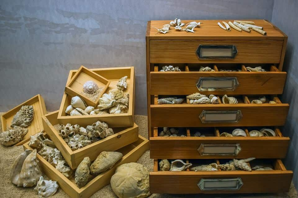 Largest collection of Shells