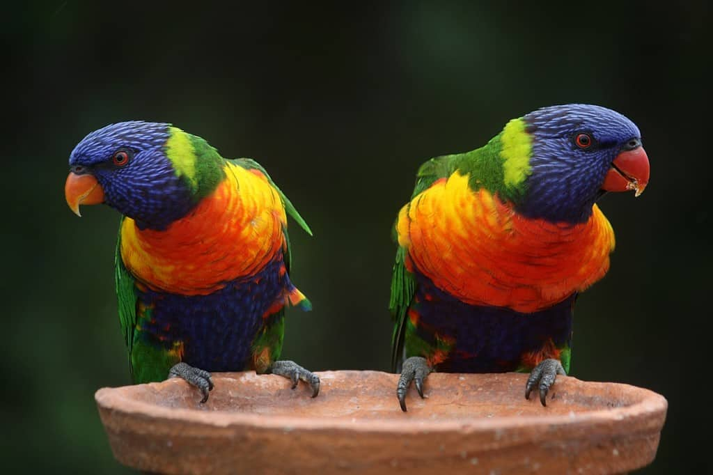 Interesting Australia fact: the country has pretty unique wildlife!