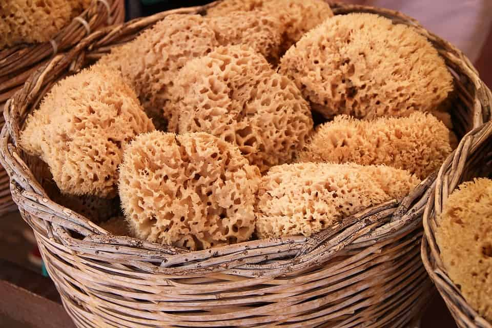 Greece leads in the production of Natural sponge