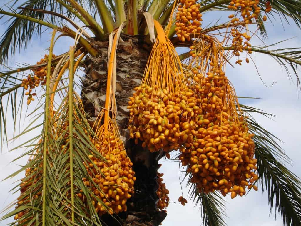 Abu Dhabi facts: dates production