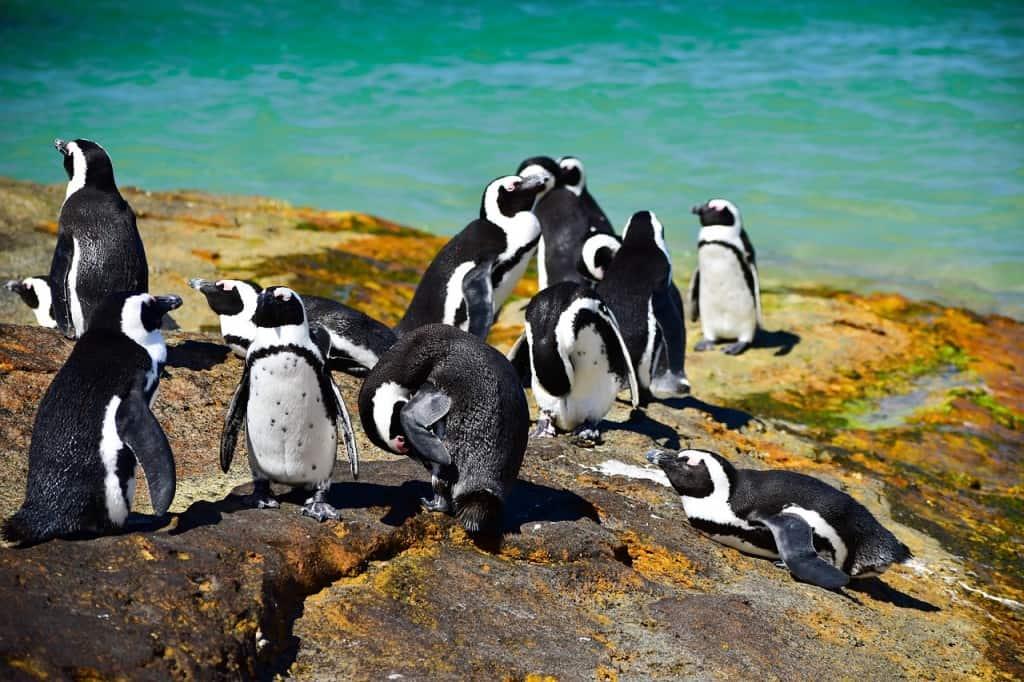 Boulders Beach penguins romantic