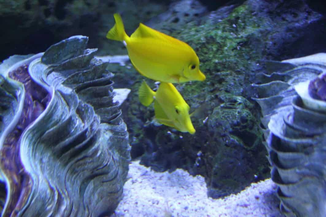 fish aquarium yellow