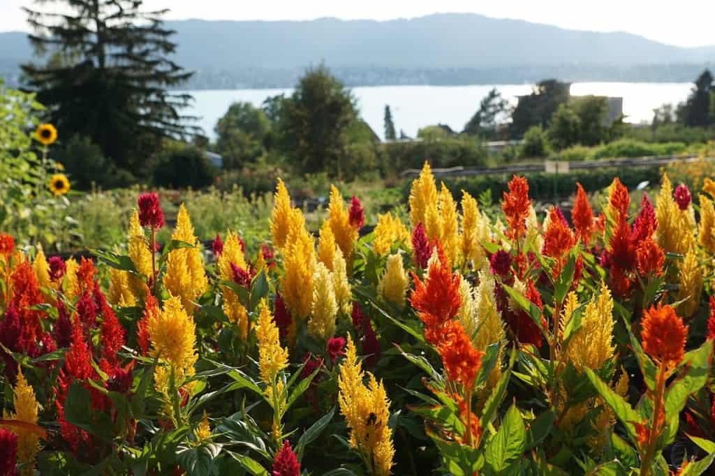 Uetliberg flowers red yellow