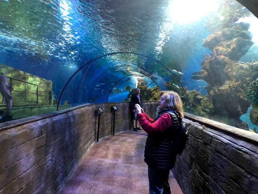 Malta National Aquarium tunnel