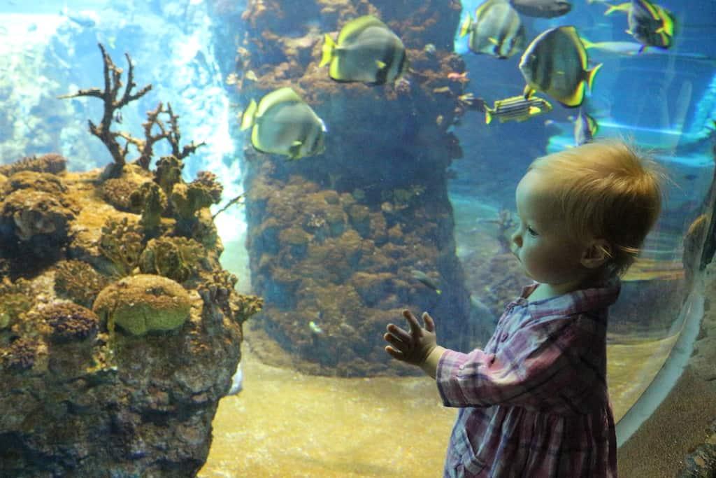 zoo wroclaw aquarium