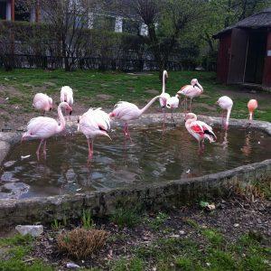 flamingos in krakow zoo